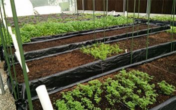 Aquaponics:  A  Promising  Method  for  Growing  Fish  and  Crops  in  Oman