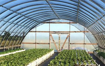 Oman's first aquaponics farm to promote organic produce