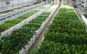 First aquaponics project to kick off on March 14